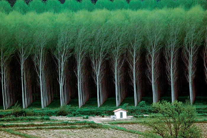 جنگل جادویی