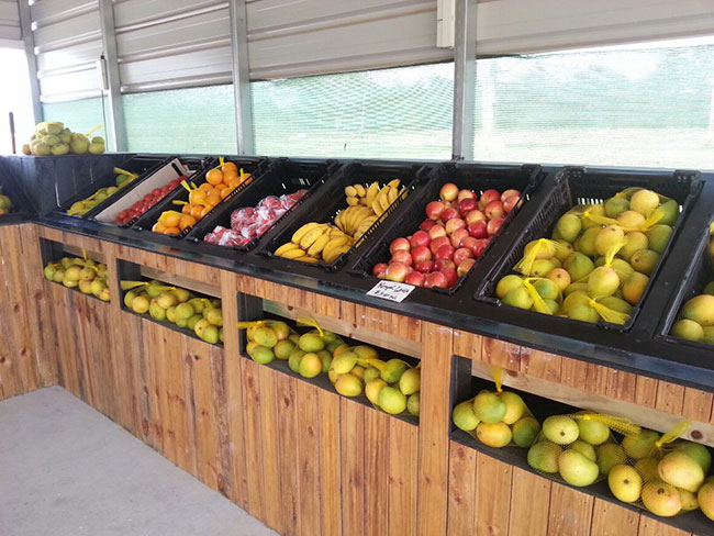 ویترین قفسه مغازه میوه فروشی