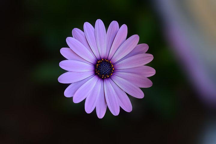 تصویر پس زمینه گل زیبا با کیفیت بالا