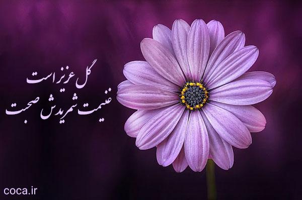 عکس گل زیبا با شعر حافظ