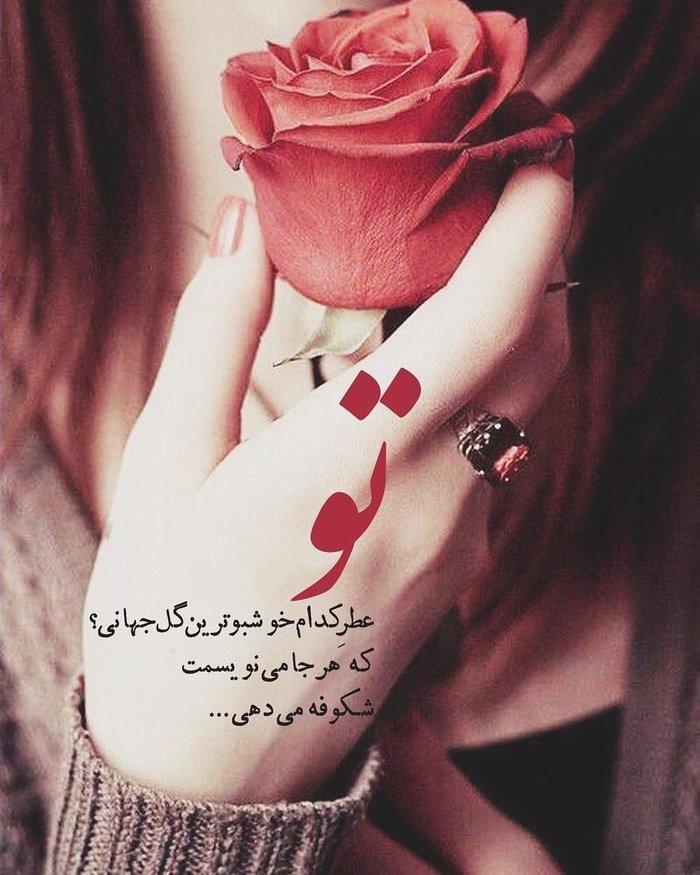 عکس پروفایل عاشقانه با گل رز خوشگل , عکس نوشته گل رز