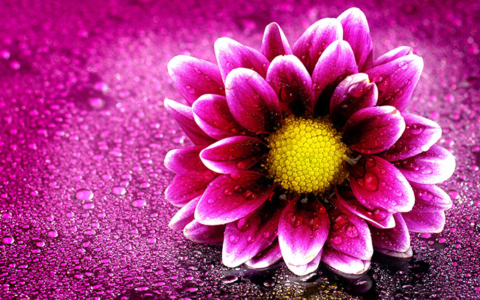 عکس پروفایل گل خاص , عکس گل , عکس گل زیبا