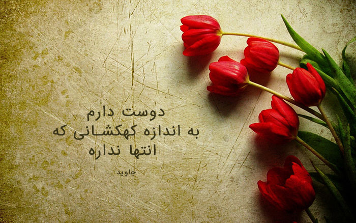 عکس گل لاله , عکس پروفایل گل لاله سرخ