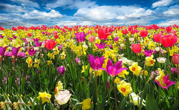 عکس پروفایل گل های بهاری, عکس گل های طبیعت