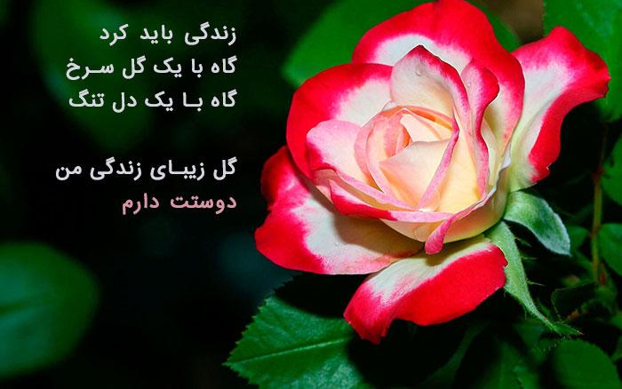 عکس پروفایل گل زیبا , عکس نوشته گل رز