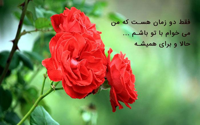 عکس نوشته گل رز , تصاویر پروفایل گل