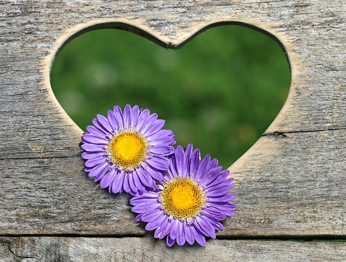 عکس پروفایل گل عاشقانه , عکس گل های فانتزی
