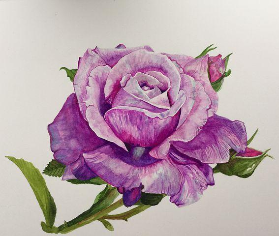 عکس نقاشی گل رز فانتزی