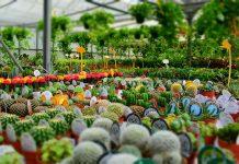 عکس گلخانه کاکتوس