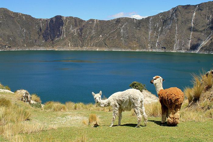 حیوانات بومی کشور اکوادور