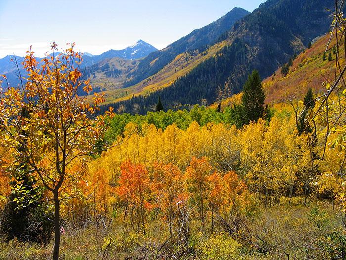 عکس طبیعت پاییزی