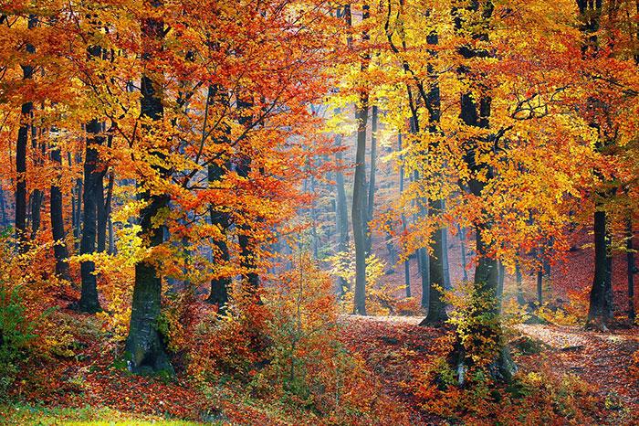 عکس طبیعت پاییزی , عکس های زیبا