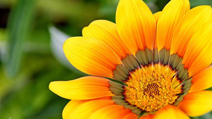 عکس گل زیبا در طبیعت , عکس های زیبا