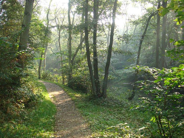 جنگل های سرسبز دانمارک