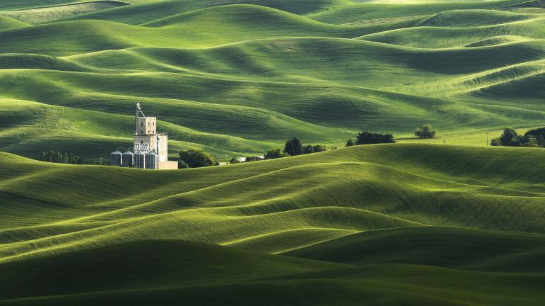 عکس طبیعت سر سبز