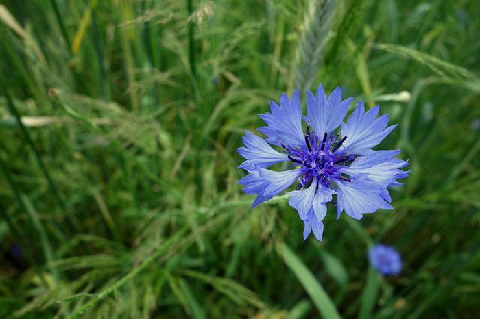 گل زیبا در طبیعت