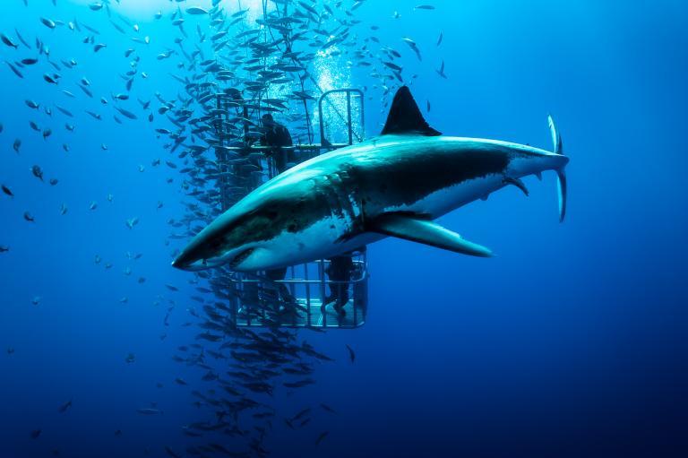 [عکس: shark-photos-10.jpg]