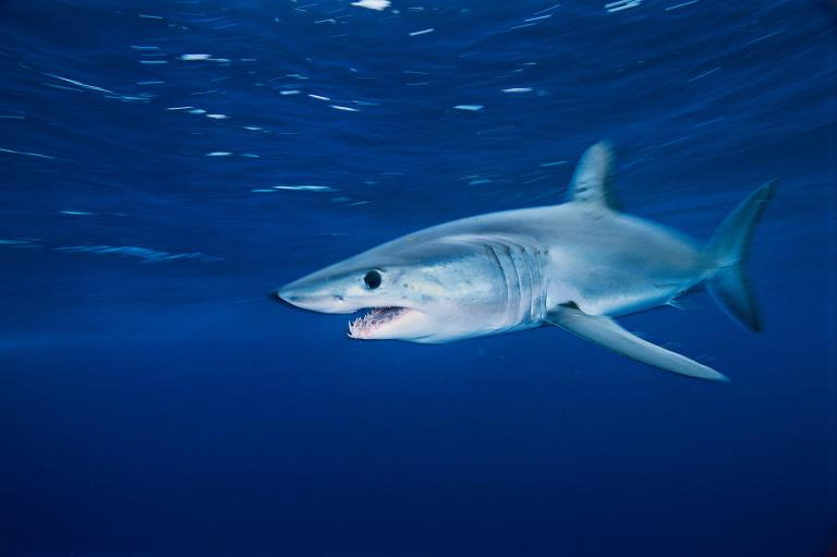 [عکس: shark-photos-14.jpg]