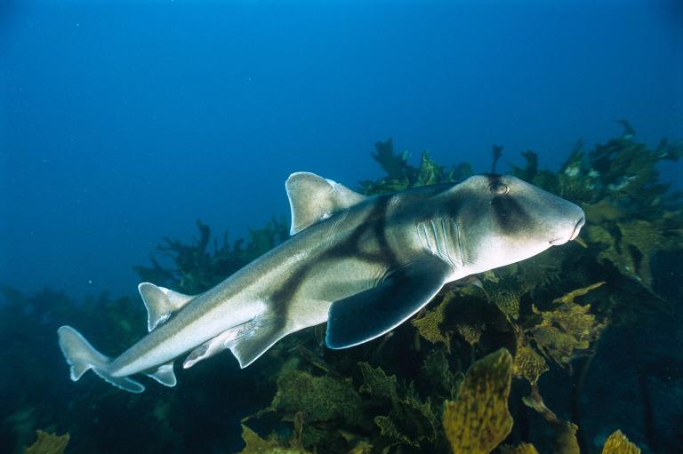 [عکس: shark-photos-16.jpg]