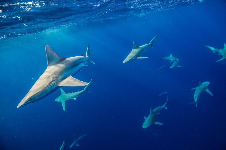 [عکس: shark-photos-18.jpg]