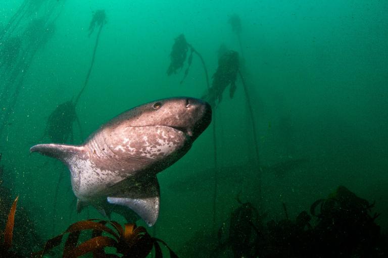 [عکس: shark-photos-19.jpg]