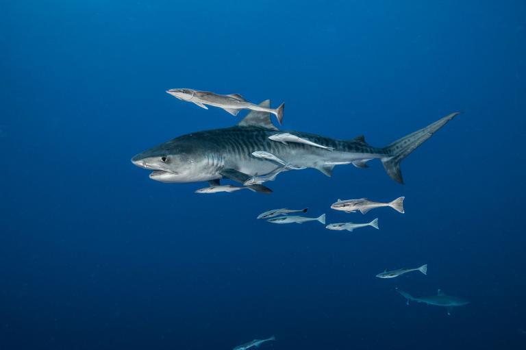 [عکس: shark-photos-21.jpg]