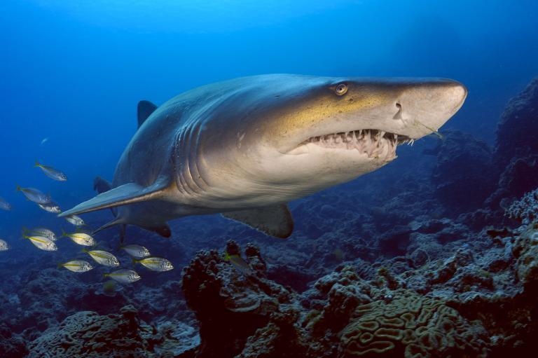 [عکس: shark-photos-23.jpg]