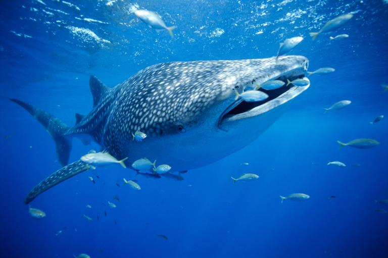 [عکس: shark-photos-25.jpg]