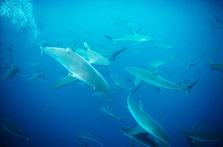 [عکس: shark-photos-4.jpg]