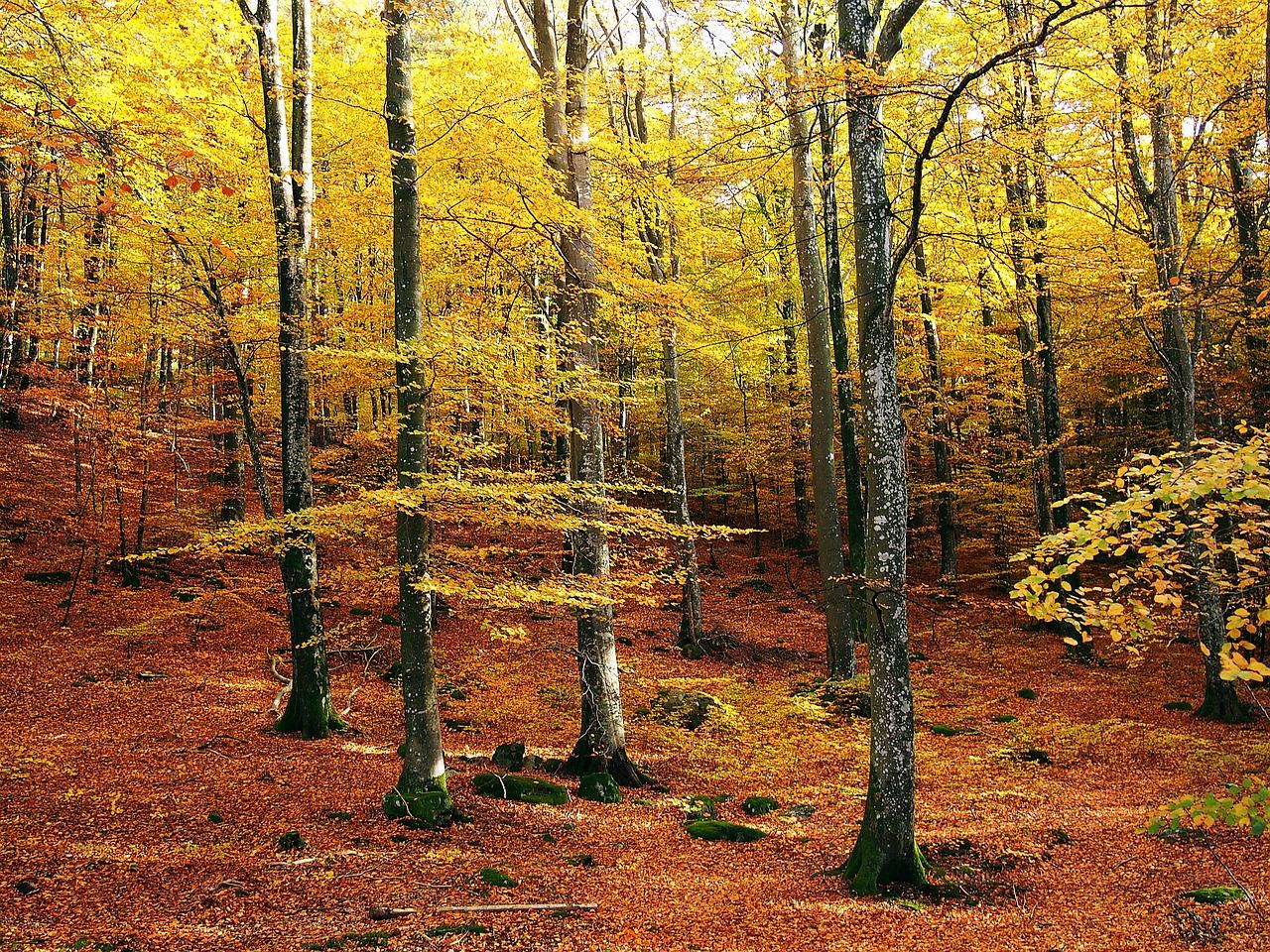 طبیعت پاییزی سوئد
