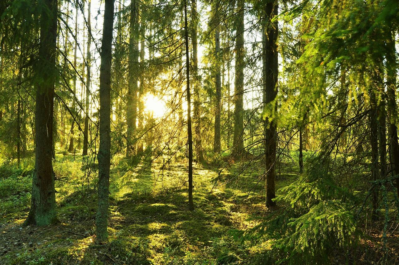 مناظر طبیعی جنگل های سوئد