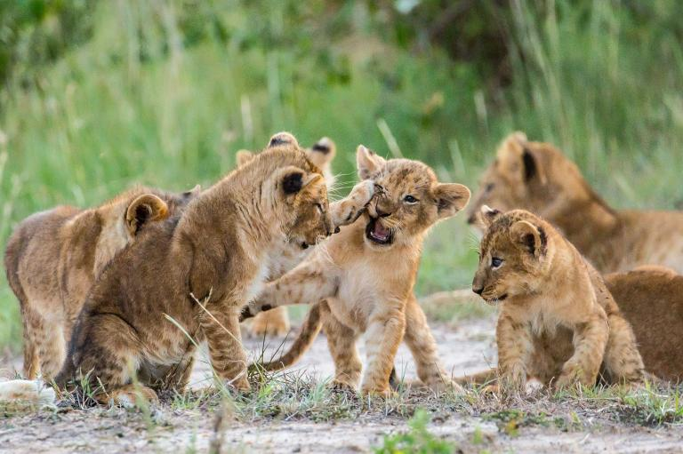 عکس مبارزات حیوانات وحشی