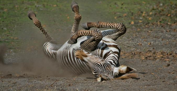 عکس های بامزه و خنده دار از حیوانات