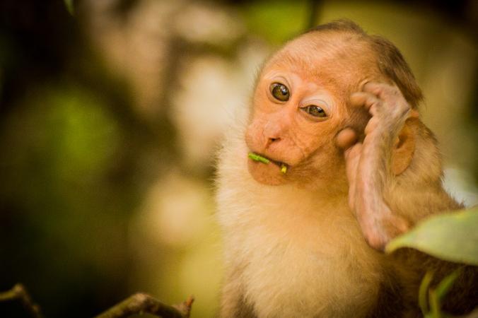 تصاویر باحال و خنده دار حیوانات