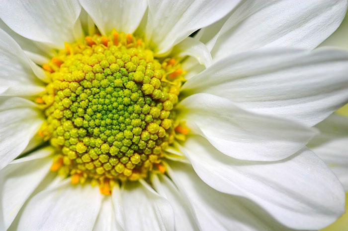 عکس نمای نزدیک گل مینا