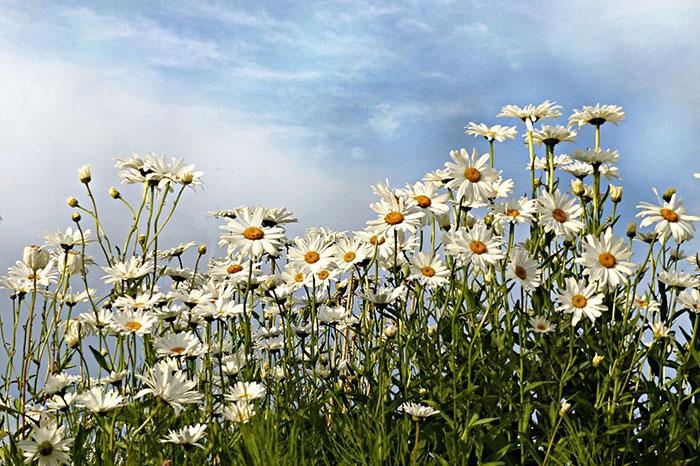 دشت گل های مینا