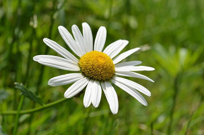 عکس گل زیبای مینا