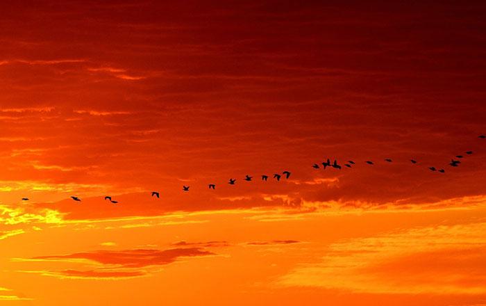 عکس ضد نور پرواز پرندگان