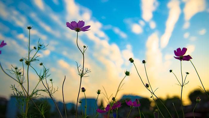 عکس گل های زیبا , عکس ضد نور