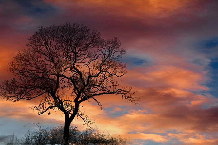 عکس ضد نور درخت