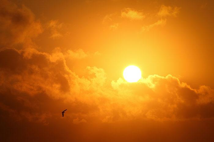 عکس ضد نور خورشید و پرنده
