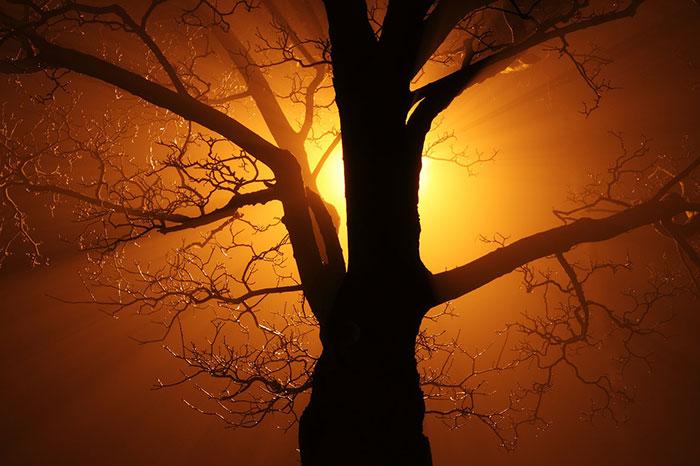 عکس ضد نور