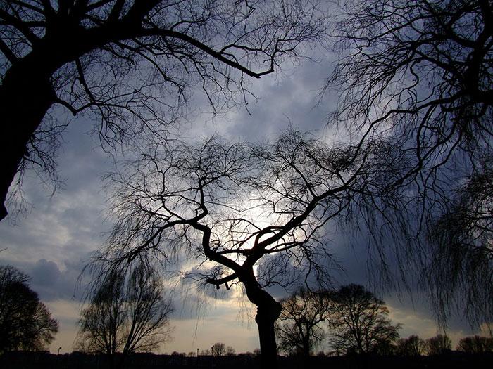 عکس ضد نور درختان