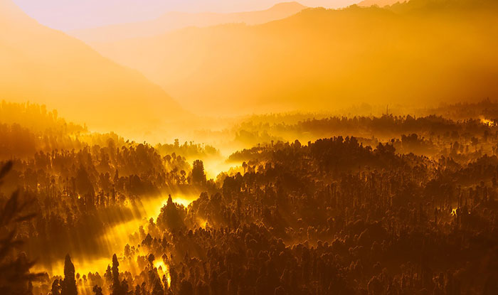 عکس ضد نور جنگل
