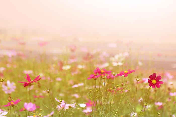 دشت گل های زیبا