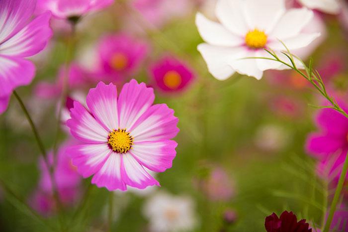 عکس گل های زیبا در طبیعت کره
