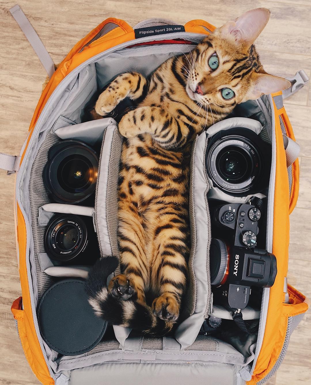 عکس گربه بنگال , طبیعت زیبای کانادا