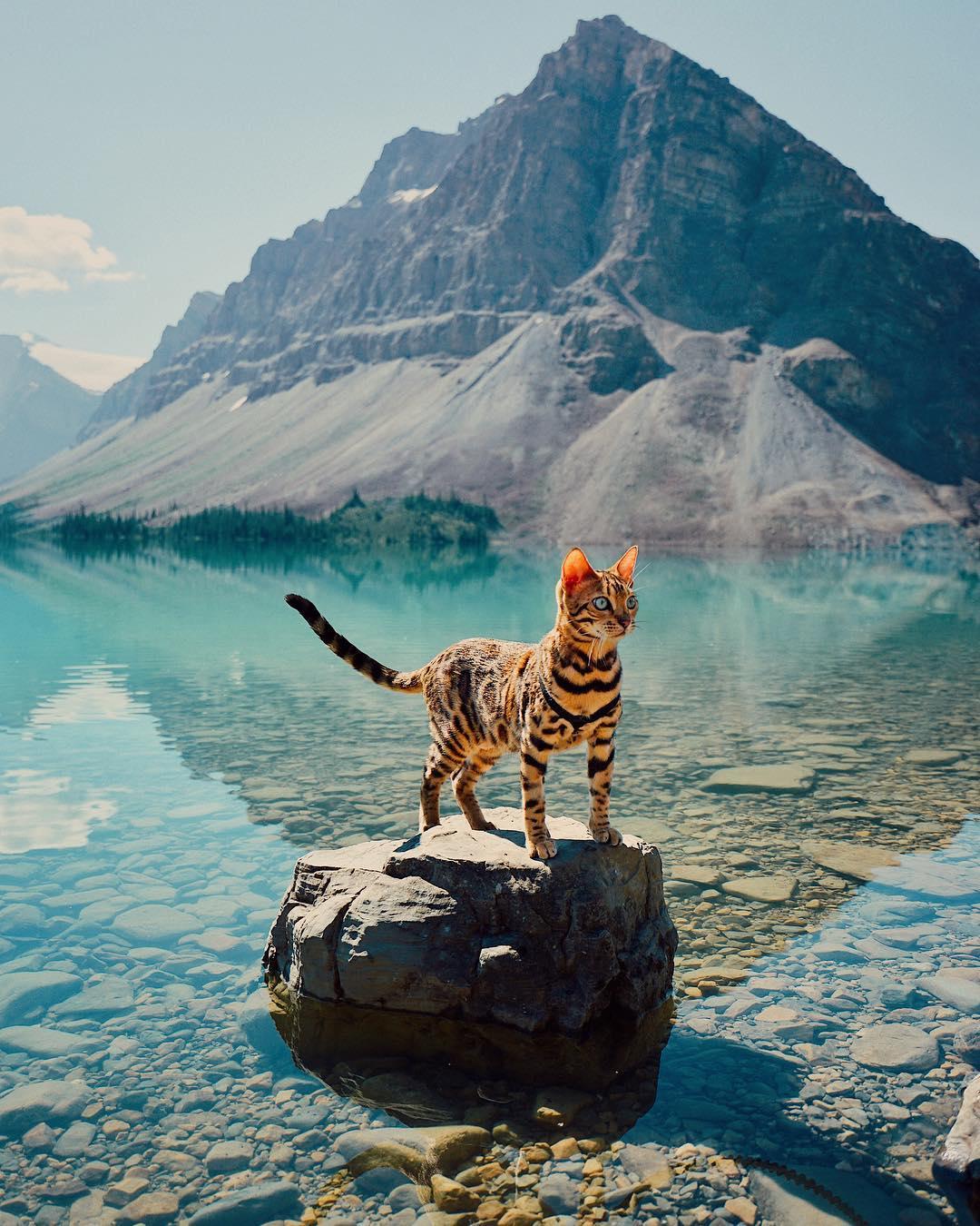 عکس گربه بنگال , گربه های بامزه