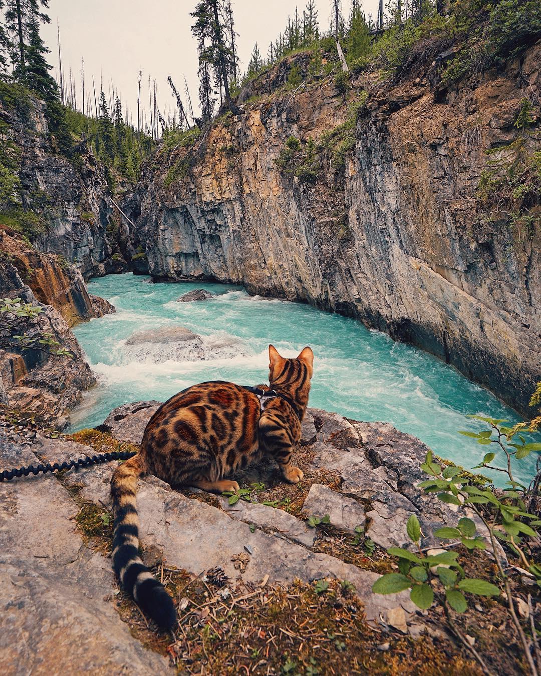 عکس گربه بنگال , عکس حیوانات اهلی زیبا