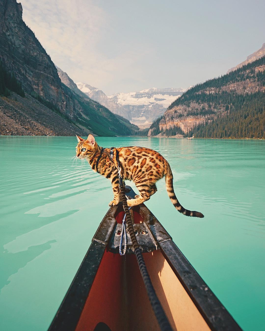 عکس گربه بنگال , طبیعت کانادا